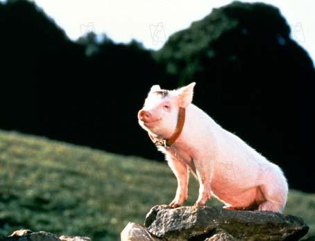 Schweinchen Babe Hund